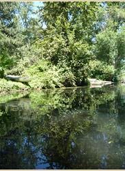 Arboretum Wetlands